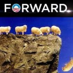 sheep-forward