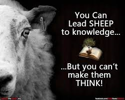 sheep think