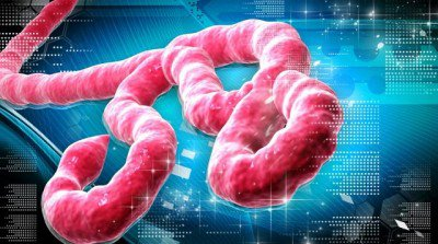 natural news ebola